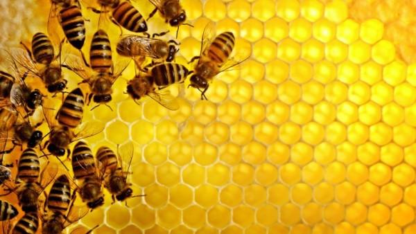 nam-mo-thay-con-ong