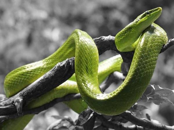 Mơ thấy rắn xanh đánh lô đề bao nhiêu?